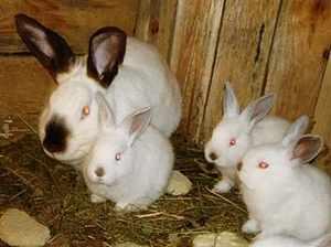 Крольчиха с крольчатами в домашних условиях