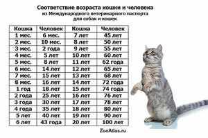 До какого возраста растет кошка