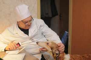 Комплексные прививки для собак и их стоимость