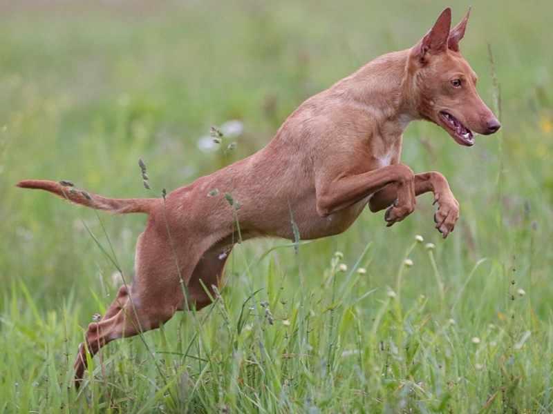 Как ухаживать ща собакой