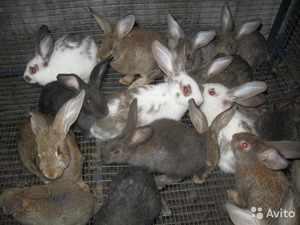 Серые кролики в клетке
