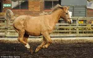 Сколько в среднем живет лошадь