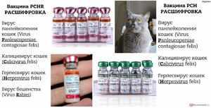 Какие прививки делают домашним кошкам