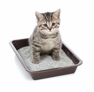 Особенности применения слабительных для кошек