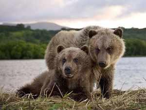 Байкал: животный мир