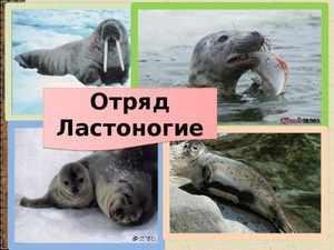 Тюления и их образ жизни