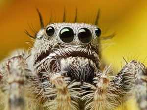 Почему у насекомых 6 ног, а у паука - 8