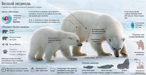 Как охотится медведь