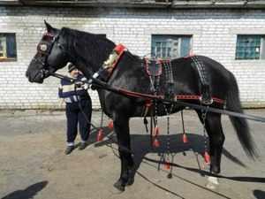 Упряжь конская для лошади