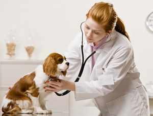 Ветеринар с собакой