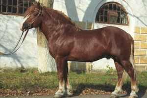 Русская тяжеловозная – порода самых больших лошадей