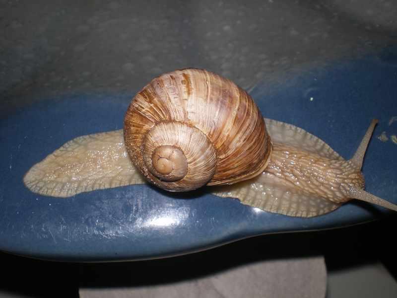 Улитки - интересный вид моллюсков