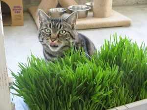 Травка для котов