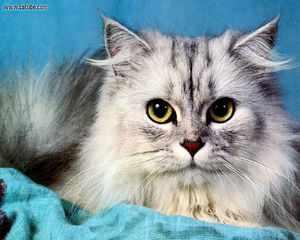 Кошки редких пород