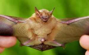 Где обитают и что едят летучие мыши