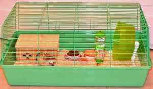 Содержание ежа в домашних условиях
