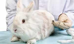 Прививки для кролчат