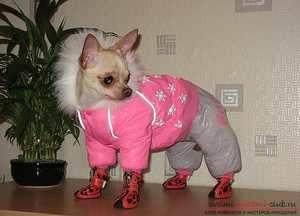 Собака в зимнем комбинезоне и обуви