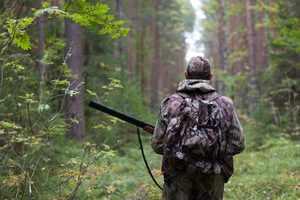 Активная охота и, особенно, браконьерство сокращают число животных