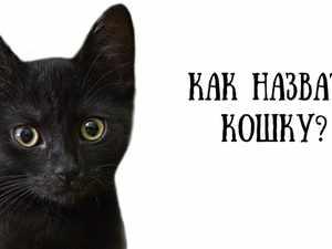 Какое имя дать коту