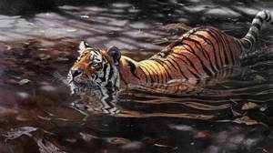 Сибирский тигр не боится воды