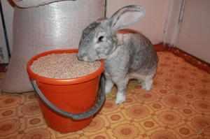 Комбикорма для кроликов -чем лучше кормить