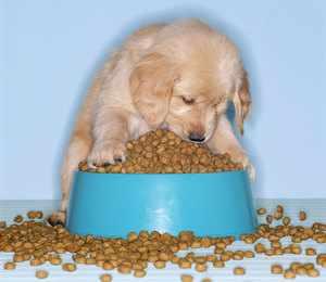 Кормление щенков кормом