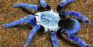 Большие и опасные пауки
