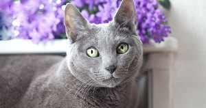 Описанеи породы кошек