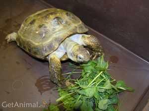 Сухопутные черепах
