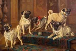 История происхождения собак породы мопс