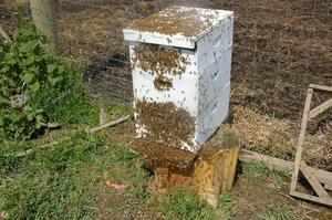Отлов роения пчел