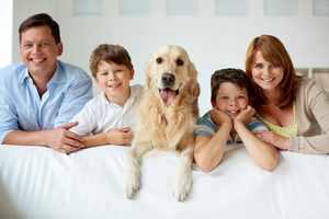 Собака в семье-содержание