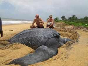 Черепаха на берегу океана