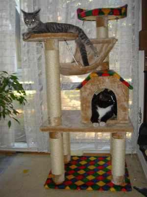 Вариант кошачьего домика