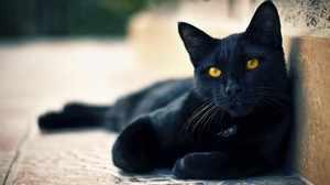 Имена для черных котов