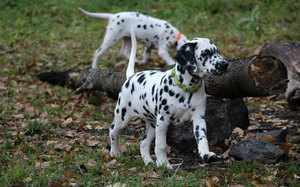 Особенности окраса собак