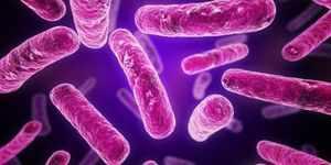 Граммположительные бактерии