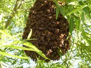 Как можно контролировать пчел