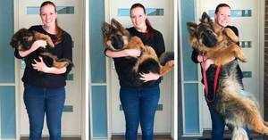 Как определить, какого роста будет щенок