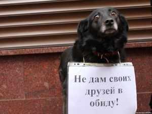Зачем усыпляют собак - причины и возможности избежать этого