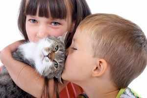 Симптомы аллергии на кота