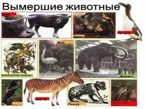 Виды вымирающих животных