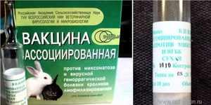 Какие прививки делать кроликам и когда