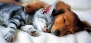 Спящие кот и собака - лучшие друзья