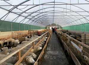 Овчарня