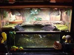 Содержание травяной лягушки