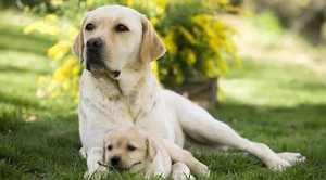 Факторы, оказывающие влияние на продолжительность жизни собак
