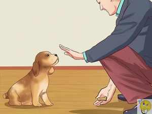Дрессура молодого щенка