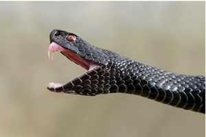 Что делать если укусила змея